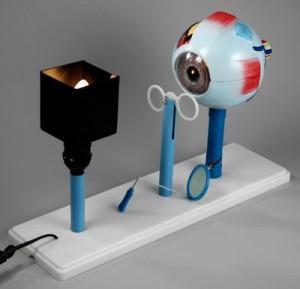 глаз 300x289 оборудование по физике для школ